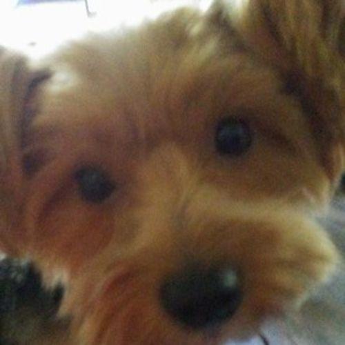 Pet Care Job Rachael G's Profile Picture