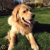 Dog Walker, Pet Sitter, Kennel in Victoria