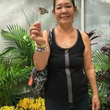 For Hire: Aunty Diane: Wonderful Domestic in Mililani Town, Hawaii