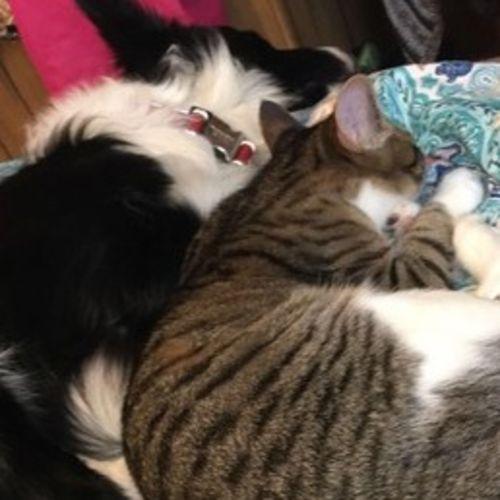 Pet Care Provider Harmonie S's Profile Picture