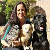 Dog Walker, Pet Sitter, Kennel in Phoenix