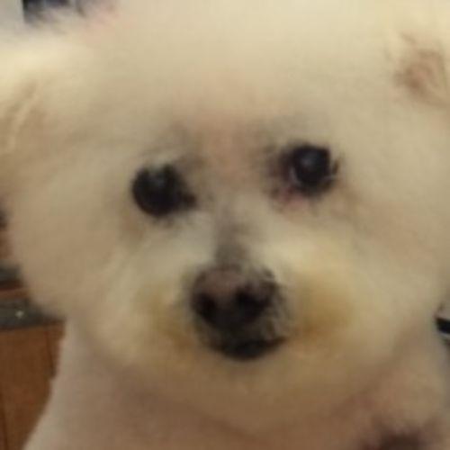 Pet Care Provider Elena Sanchez Gallery Image 1