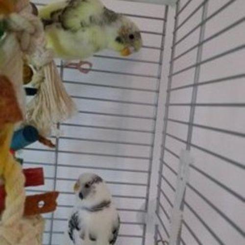 Pet Care Provider Tante Lori Pet Sitting & Dog Walking Gallery Image 3