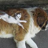 Dog Walker, Pet Sitter in Abbotsford
