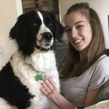 Service Dog Handler and Trainer for pet sitting and walking. Flexible hours!