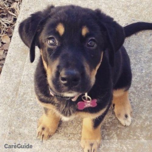 Pet Care Provider Angel Desjarlais's Profile Picture