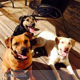 Dog Walker, Pet Sitter in Belleville
