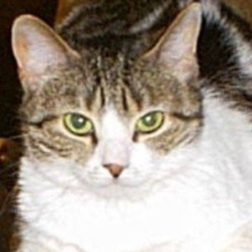 Pet Care Provider Theresa Pinkston's Profile Picture