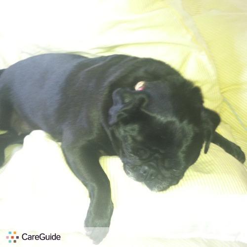 Pet Care Provider Shailey Wilkinson's Profile Picture