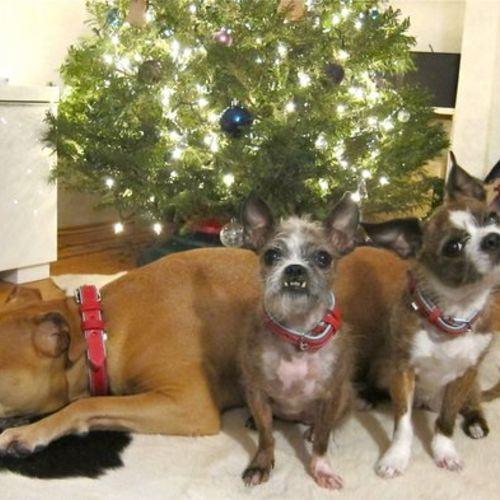 Pet Care Provider Melissa I Gallery Image 2