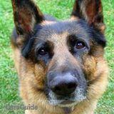 Dog Walker, Pet Sitter in Coconut Creek