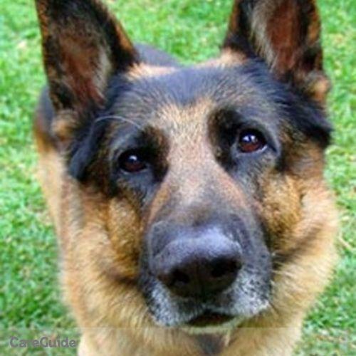 Pet Care Provider Hana Bora's Profile Picture