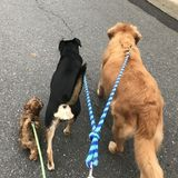 Fort Mill Dog Walker/ pet care taker For Job Opportunities