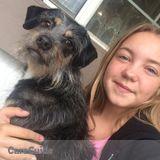 Dog Walker, Pet Sitter in Concord