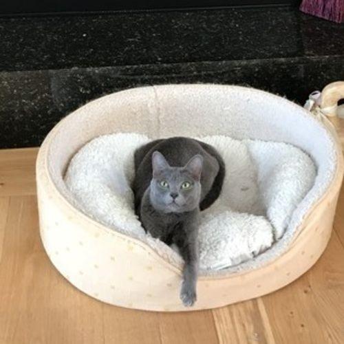 Pet Care Job Zelda N's Profile Picture