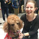 Greenwich Pet Sitter Interviewing For Work in Fayetteville