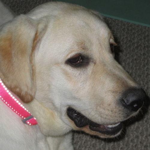 Pet Care Provider Robin R's Profile Picture