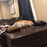 Seasoned Pet Supervisor in Manorville