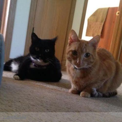 Pet Care Provider Laura S's Profile Picture