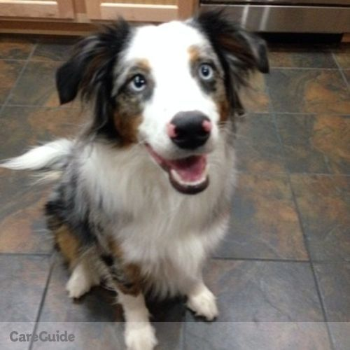 Pet Care Job Amanda Gordon's Profile Picture