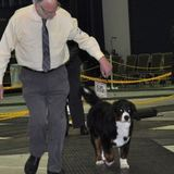 Dog exercise and Care