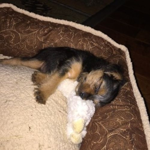 Pet Care Job Rebecca Benjamin's Profile Picture