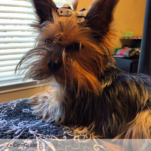 Pet Care Provider Hannah H's Profile Picture