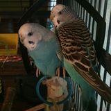 Bird sitter wanted.