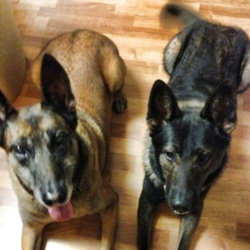 Pet Care Job Staci Evans's Profile Picture