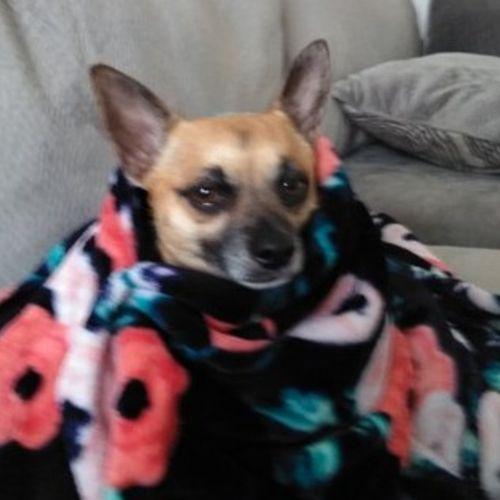 Pet Care Provider Colleen C's Profile Picture