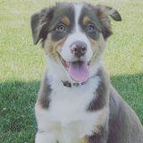 Dog Walker, Pet Sitter in Clifton Park