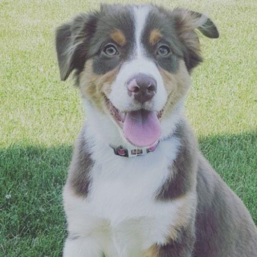 Pet Care Provider Jasmine Herrera's Profile Picture