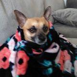 Dog Walker, Pet Sitter in O'Fallon