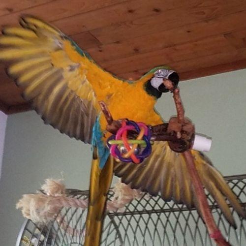Pet Care Provider Jeane Ruddy's Profile Picture