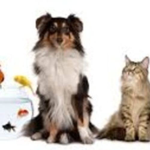 Pet Care Provider Robyn McCrea's Profile Picture
