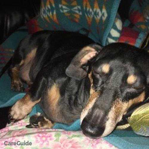 Pet Care Provider Ariela Finley's Profile Picture