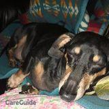 Dog Walker, Pet Sitter in Boise
