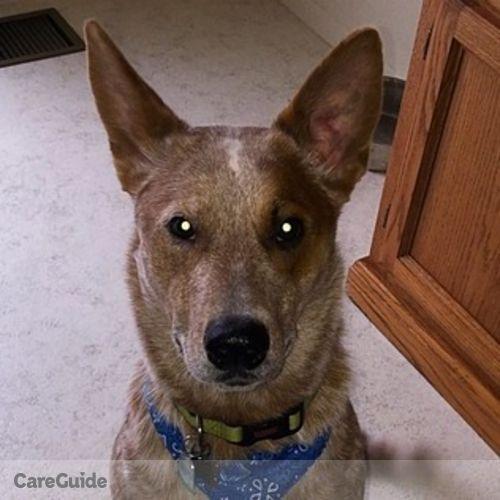 Pet Care Job Kayla Osborne's Profile Picture
