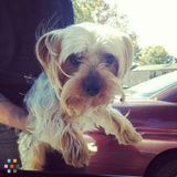 Dog Walker, Pet Sitter in District Heights