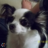 Dog Walker, Pet Sitter in Vacaville