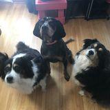 Mayville, North Dakota Family looking for pet sitter!
