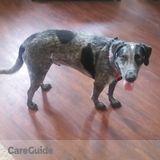 Dog Walker Job, Pet Sitter Job in Billings