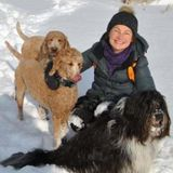 Active, reliable and dog loving retiree would be happy to walk and play with your dog while you are away