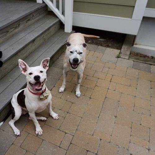 Pet Care Job Sabrina Benko's Profile Picture