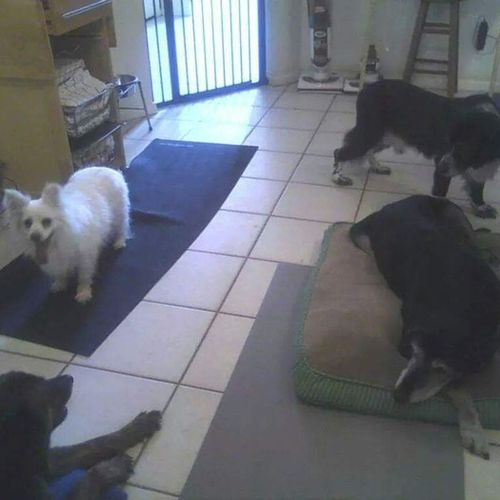Pet Care Provider Noah's Ark Pet & House Sitting Gallery Image 1