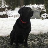 Dog Walker Job, Pet Sitter Job in Vancouver