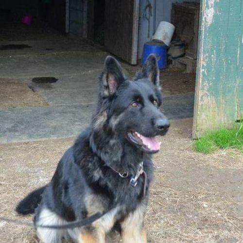 Pet Care Provider Sarah Cote Gallery Image 2