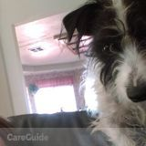 Dog Walker, Pet Sitter in Temecula
