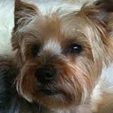 Dog Sitter Job Posting