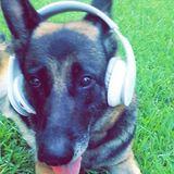 Dog Walker, Pet Sitter in Greenwood